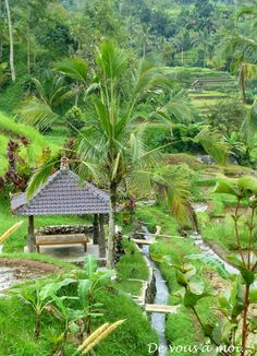 De vous à moi...: Bali Village Photography, Travel Photography, Photography Poses, Travel Around The World, Around The Worlds, Palmiers, Farm Stay, Beautiful Places To Travel, Ubud
