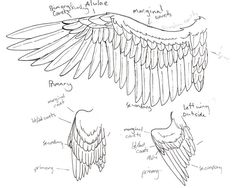 wing anatomy by Niffler13.deviantart.com on @DeviantArt