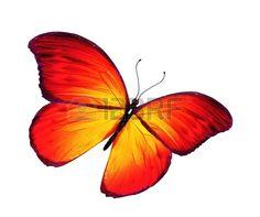 papillon: Orange papillon volant, isolé sur fond blanc