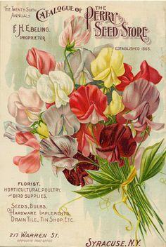vintage, seed packet