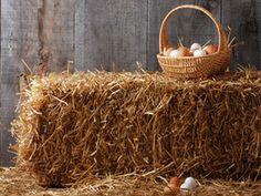 Ostern werden Eier versteckt! - das gehört einfach dazu! Die Geschichte vom Ei und die Antwort auf die Frage warum Ostern und Eier zusammengehören verstecken sich hinter diesem Bild! :-)