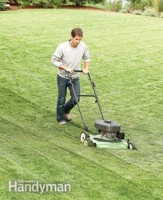 Repair a Lawn in one season