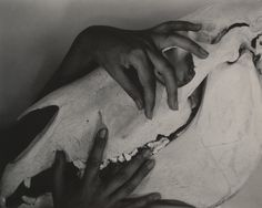 Georgia O'Keeffe, Hands and Horse Skull, 1931 / Alfred Stieglitz