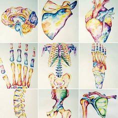 Watercolour Anatomy art