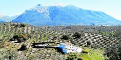 A weekend in the campo: Mountain-biking, yoga and feasting in stunning Subbetica :http://www.theolivepress.es/spain-news/2016/05/01/a-weekend-in-the-campo-mountain-biking-yoga-and-feasting-in-stunning-subbetica/