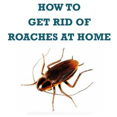 Cockroaches in the home is not only annoying for family members, it can be quite dangerous because these insects carry different diseases and can contamina Roaches, How To Get Rid, Pest Control, Home Improvement, Remedies, Community, Cleaning, Home Repair, Home Improvements