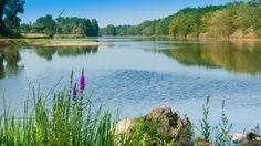 La Loire à Pouilly sous Charlieu, juste à l'embouchure du Jarnossin.