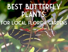 For thirty years we've grown and sold native and hardy Florida-friendly plants to Florida residents. We stock hundreds of species of trees, shrubs, vines, grasses, groundcovers, wildflowers and pond plants to meet your needs. We now have edibles and herbs, too! We're a state-registered, fully licensed and insured nursery offering landscape consultation, design, installation and maintenance. Our staff helps individuals and organizations plan naturalistic gardens and landscapes.
