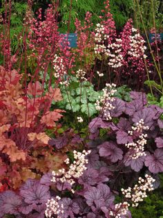 "Shade garden in back. Heuchera is available in so many colors now, I recommend ""Wendy"" and ""Palace Purple"", both old standards. Dream Garden, Garden Art, Garden Cottage, Garden Design, Herb Garden, Shade Garden Plants, Shade Perennials, Woodland Garden, Plantation"