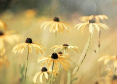 ~Autumn Yellow~
