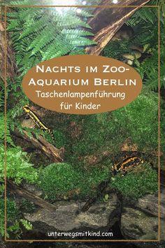 Eine Nachtführung zeigt das Berliner Zoo-Aquarium von ganz anderen Seiten. (Nicht nur) Kinder staunen beim nächtlichen Blick hinter die Kulissen. #berlin #reisenmitkindern #zoo #aquarium #berlinmitkindern #familienreise #städtereise #familienausflug #ausflugsziele
