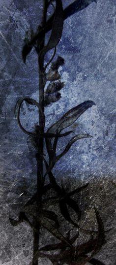 Päivi Hintsanen: From the Garden VII, 2011