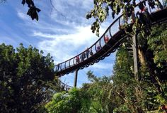 TC News - www.tensilecables.co.za | Snaking through Kirstenbosch: The Boomslang