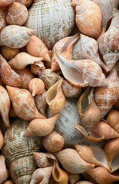 I love seashells