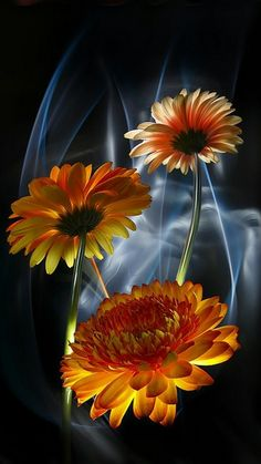 Gorgeous Flowers !!