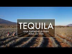7 cosas que hacer en el Pueblo Mágico de Tequila | México Desconocido
