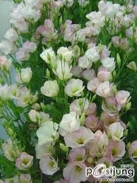 Image result for lysianthus