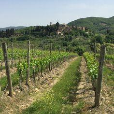 Vineyard, Outdoor, Nature, Outdoors, Outdoor Games, Outdoor Living