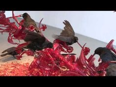 JAVIER PÉREZ - POST NATURA, at the MAM Mario Mauroner Contemporary Art, Vienna, Austria - YouTube