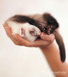 Un tout petit bébé!!! Je le veux!!! Dawww! :)