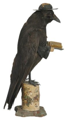 Antique Victorian taxidermy of a raven portrayed as a priest, circa 1900.  Raven, fitted with horn rim glasses, a white cross, hands, a bible and a typical minister's hat. 17 inches tall.  In search of credits.