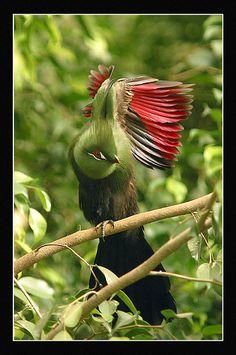 exotic bird by jltfoto, via Flickr