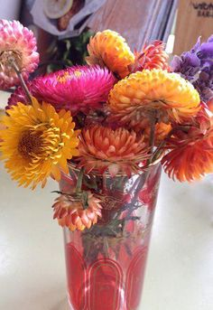 Paper daisies plucked from the roadside in Canberra