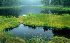 Wigry National Park .Poland
