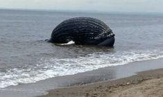Marine Conservation Society, Vegan Animals, Humpback Whale, Marine Life, Metal, Wildlife, Environmental Issues, Coast Guard, Oceans