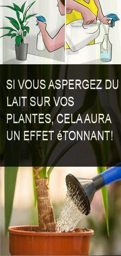 Si vous aspergez du lait sur vos plantes, cela aura un effet étonnant! #Plante #Plantes #Lait #Aspergez Plantation, Aide, Culture, Plants, Gardens, Asperger, Milk Jars, Green Plants, Home Made