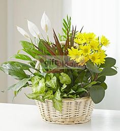Dish Garden with Fresh Cut Flowers  Send your warmest regards with an elegant dish garden that combines the fragrance of a fresh bouquet with the lasting beauty of indoor plants. Components may vary.