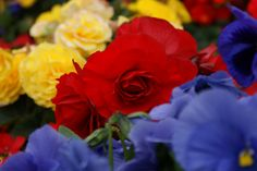 Alaska's Flowers