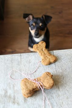 Treat your fur baby dogs with these homemade dog bone biscuits flavored with peanut butter and oats. These dog treats are easy to make! Homemade Dog Treats, Pet Treats, Homemade Cookies, Baby Dogs, Dogs And Puppies, Peanut Butter Dog Biscuits, Dog Bone Cookie Cutter, Dog Cookies, Dog Bones