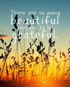 There are so many beautiful reasons to be grateful. thedailyquotes.com