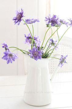 320 Besten Harmonic Lilac Bilder Auf Pinterest Flowers Lavender