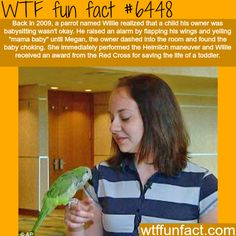 Willie the parrot, saves the life of a toddler - WTF fun facts