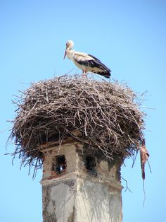 A Stork Nests in an Ancient Chimney-Harman-Romania.jpg