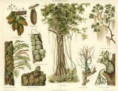 Resultado de imagen para botanical vintage