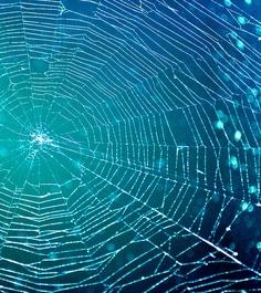 Spider Web by Jillsy Girl (flickr)