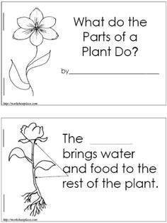 Booklets and worksheets for plant study. PERFECT for science instruction! Kindergarten Science, Elementary Science, Science Classroom, Science Education, Teaching Science, Science Activities, Science Books, Science Ideas, Classroom Ideas