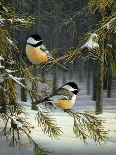 birds in a pinetree