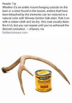 Deer Hunting Decor, Deer Head Decor, Deer Mount Decor, Antler Mount, Deer Antler Crafts, Antler Art, Painted Antlers, Taxidermy Decor, Deer Mounts