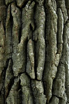 Texture-Rrific Tree Bark by Odalaigh Art Texture, Pattern Texture, Texture Design, Natural Forms, Natural Texture, Patterns In Nature, Textures Patterns, Into The Woods, The Design Files