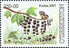 ◇Uzbekistan  2007
