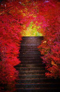 ただなにか この階段を上ると 願いが 叶うような気が……