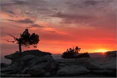 Bent Jeffrey Pine, Sentinel Dome Sunset by Don Smith on Gods Glory, Photo Look, Heaven On Earth, Sunrise, Exotic, How To Plan, Landscape, City, Nature