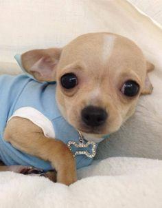 i am so cute!!!