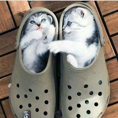Kittens lying in a pair of sandal.