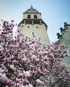 Can't get enough of these beautiful blossoms in Zurich. The magnolia in particular is just so fleeting! Have a great week ahead! Blossom Trees, Blossoms, Spring Blooming Flowers, Spring Blossom, Farm Yard, Spring Garden, Mother Nature, Perennials, Garden Design