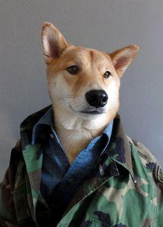 Camo Street Cred #mensweardog #menswear #dog #military #shiba #dapper #fashion…
